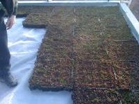 toiture vegetale 014.jpg