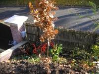 toiture vegetale 004.jpg