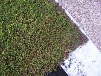 toiture vegetale 011.jpg